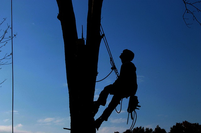 Tree Removal Services for Homeowners