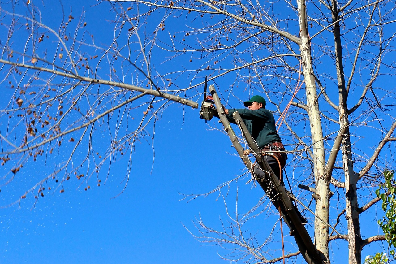 Why It Is Important To Hire Tree Removal Services